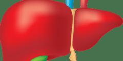 اهم وظائف الكبد وفحوصاته